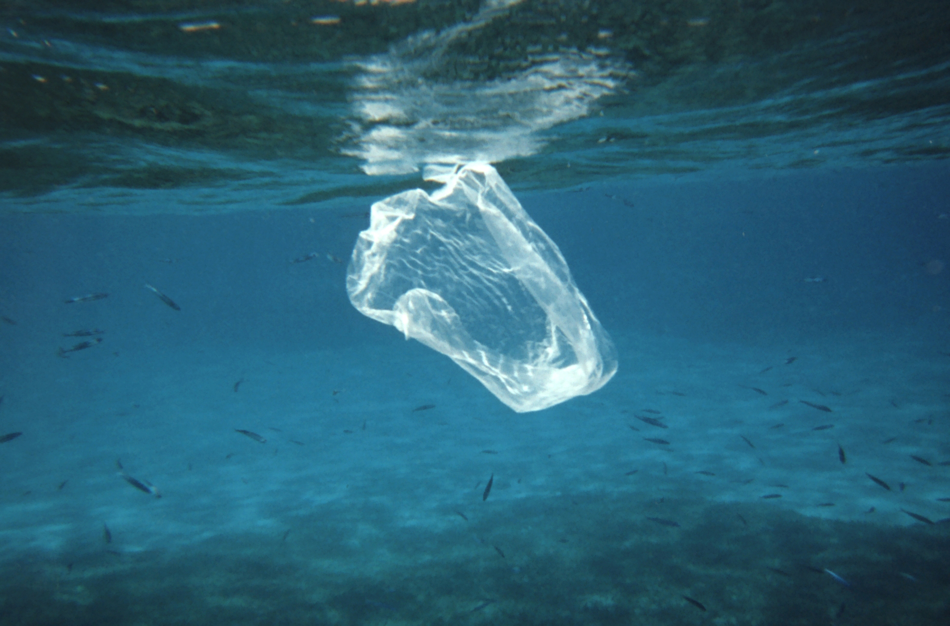 End of the line for single-use plastic?
